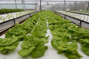 Lâm Đồng thu hút gần 3.000 tỷ đồng vào sản xuất nông nghiệp công nghệ cao
