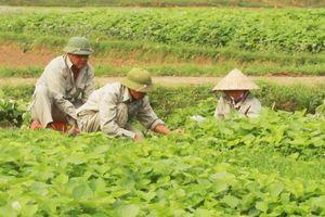 Huyện Thọ Xuân có 92 doanh nghiệp hoạt động trong lĩnh vực nông nghiệp