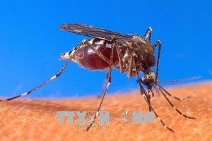 Virus Tây sông Nile xuất hiện tại Bulgaria