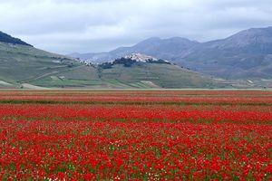 'Lạc trôi' trên những cánh đồng hoa đẹp như trong truyện cổ tích