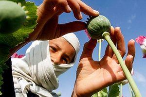 Afghanistan: Trẻ thơ vô tội phải hứng chịu hậu quả chiến tranh