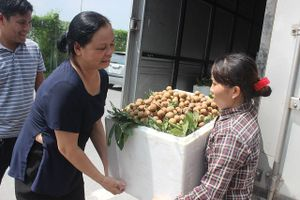 Hà Nội khởi hành xe xuất khẩu nhãn chín muộn sang châu Âu và Mỹ