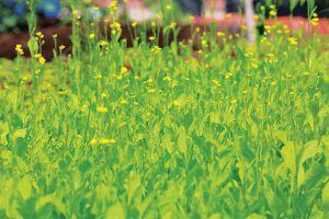Cần thay đổi quan niệm về thuốc diệt cỏ