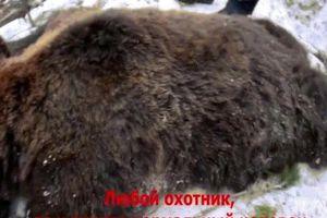 Video thống đốc Nga bắn chết gấu ngủ đông gây phẫn nộ