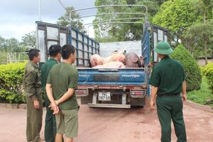 Kiểm soát chặt chẽ tình trạng buôn lậu gia súc, gia cầm qua biên giới