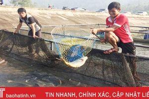 Nuôi cá lồng nhựa: Chi phí thấp, hiệu quả cao