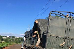 Bắt giữ xe chở cây đa cổ thụ đang trên đường ra Bắc
