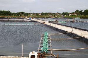 Phát triển nuôi trồng thủy sản theo hướng bền vững