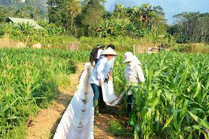 Tuyên Quang: Nông thôn đổi thay từ 'ý Đảng, lòng dân'