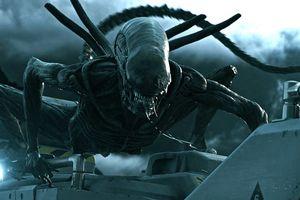 Lịch sử đối đầu đẫm máu giữa Quái thú Predator và Alien