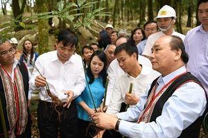 Thủ tướng Nguyễn Xuân Phúc thăm và trồng lưu niệm sâm Ngọc Linh tại Kon Tum