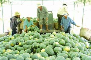 Thay đổi tư duy về xuất khẩu nông sản