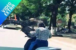 Nữ tài xế lái xe máy, trên tay cầm đại bàng dạo phố