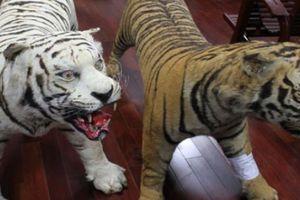 Cần Thơ: Người giữ 2 bộ da hổ bị điều tra thêm hành vi lừa đảo