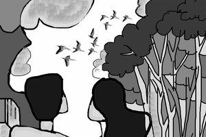 Tiếng chim rừng