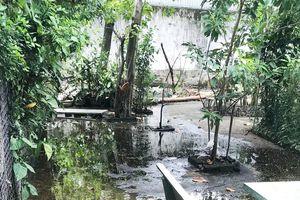 Nhà máy xả nước bẩn, gây ô nhiễm khu dân cư tại TP.HCM