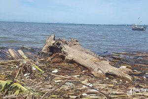 Sau những ngày mưa lớn, biển Quỳnh ngập rác