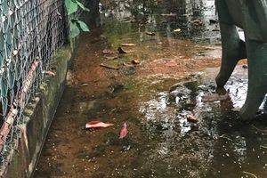 TP.HCM: Nước bẩn từ nhà máy làm khổ người dân, chính quyền phường xã cũng bó tay