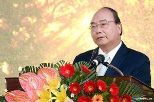 Thủ tướng kỳ vọng sâm Ngọc Linh mang lại giá trị tỷ USD thập niên tới