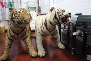 Cần Thơ: Điều tra thêm hành vi lừa đảo đối với người giữ 2 bộ da hổ