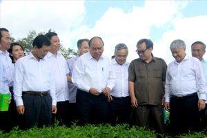 Thủ tướng Nguyễn Xuân Phúc thăm vườn chè 100 tuổi tại Gia Lai