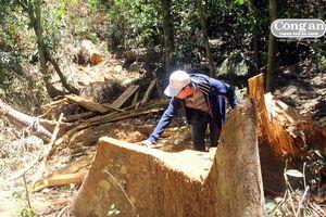 Thâm nhập điểm nóng phá rừng phòng hộ Cà Dy