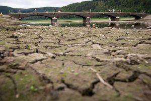 Hệ sinh thái trước nguy cơ biến đổi khủng khiếp