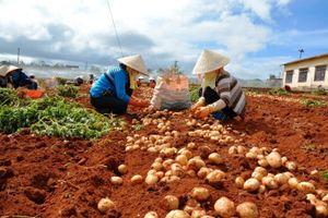 Lâm Đồng công bố 17 cơ sở kinh doanh nông sản Trung Quốc
