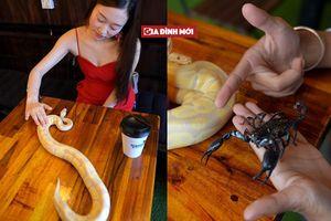 Quán cà phê độc lạ: Khách hàng tha hồ ôm ấp rắn, trăn, thằn lằn và bọ cạp