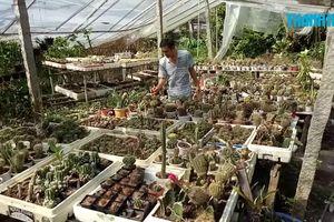 Chiêm ngưỡng vườn xương rồng hơn 10.000 cây của nhà vườn miền Tây