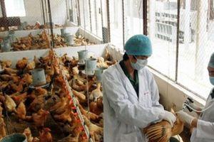 Bắc Ninh: Ứng dụng công nghệ cao vào phát triển các mô hình nông nghiệp