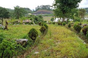 'Ưu ái' giao đất rừng thần tốc, doanh nghiệp được thể làm liều