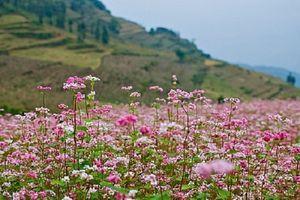 Hãy xách ba lô đến với mảnh đất Hà Giang xinh đẹp vào tháng 10 này