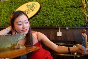 Giới trẻ Campuchia bị hút hồn với quán cà phê bò sát