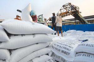 Nông nghiệp ĐBSH: Mở hướng đi mới cho sản xuất lúa gạo