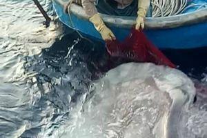 Nghệ An: Cá mặt trăng 'khủng' mắc lưới ngư dân