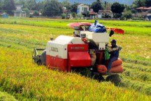 Liên kết trồng lúa với HTX Thanh Yên, nhà nông khỏi lo đầu ra