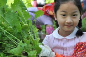 Xem người Đài Loan 'đào vàng' ở 'mỏ vàng' du lịch nông nghiệp