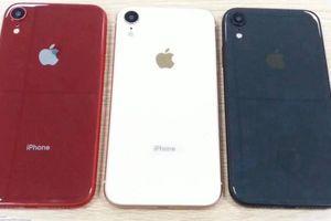 iPhone Xc màn hình 6,1 inch lộ ảnh, sở hữu 2 khe cắm SIM