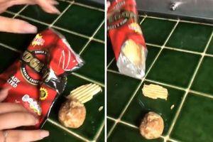Tá hỏa phát hiện củ khoai tây to đùng, còn vỏ trong gói snack