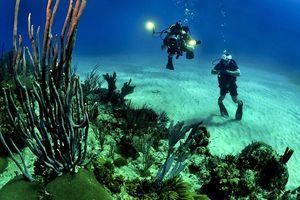 Bí ẩn những dấu chân kỳ lạ dưới biển sâu