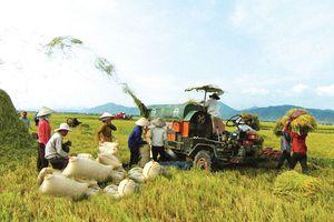 Vay vốn tín dụng phục vụ phát triển nông nghiệp, nông thôn của Chính phủ