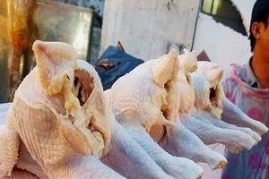 Đề xuất cấm nhập gà không đầu, không chân... vào Việt Nam