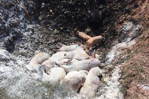 Công điện khẩn về bùng phát bệnh dịch tả lợn Châu Phi