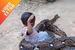 Hãi hùng cảnh bé trai ôm đầu, đùa với trăn khổng lồ ở Indonesia