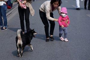 Sẽ cấm mang chó, mèo vào phố đi bộ hồ Gươm