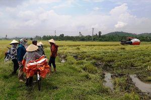 Giang hồ bảo kê máy gặt, nông dân khốn khổ