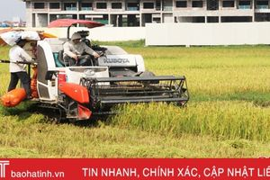 Sau mưa, nông dân Hà Tĩnh hối hả ra đồng thu hoạch lúa