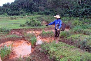 Nước có màu đỏ chảy ra suối Đắk Ker (Đắk Nông) không ảnh hưởng tới môi trường