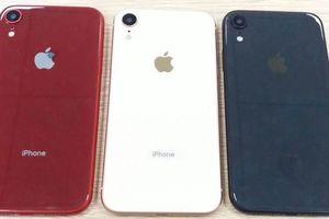 Xuất hiện hình ảnh rò rỉ mới nhất về iPhone XC giá rẻ, 4 màu, 2 SIM